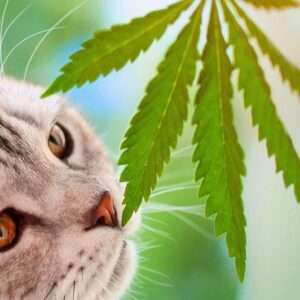 Pet Care CBD